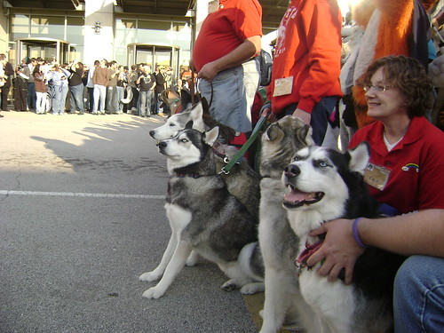 Huskies! | by dmuth