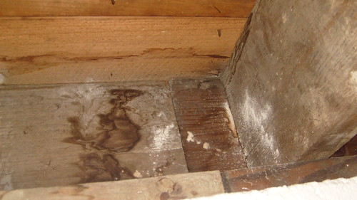 how to get rid of white mold in basement