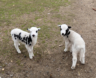 We are the baby lambs | by excard1970