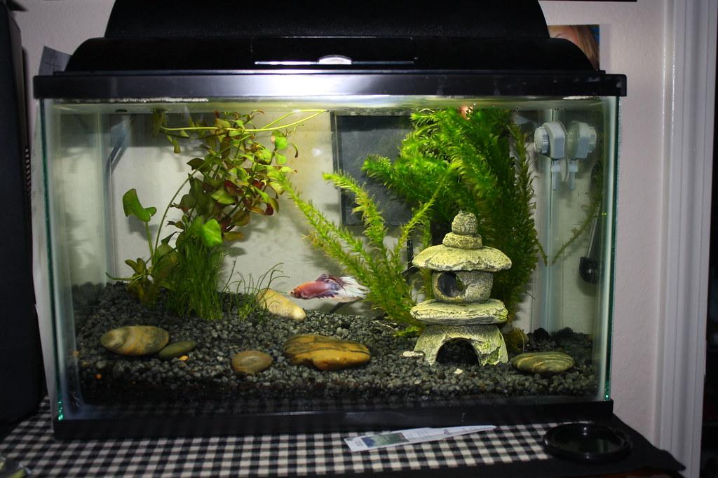 5 gallon betta tank currently has baby guppies in it for 5 gallon betta fish tank
