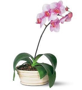 ... Indoor Flowering Plants Http://www.1 800 USFlowers.com