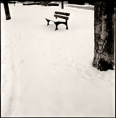 winter bench • chenôve, burgundy • 2010 | by lem's