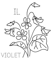 Illinois Violet | by turkeyfeathers