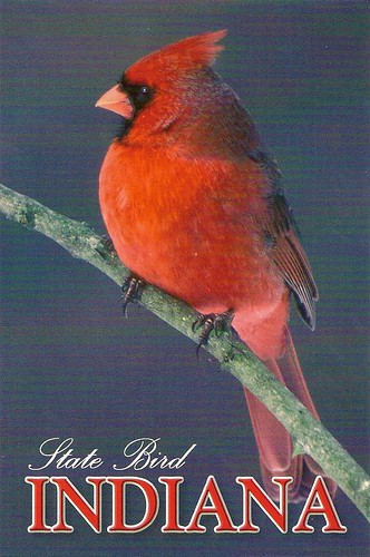 Indiana State Bird 3 Available Sc Postcard Trader Flickr