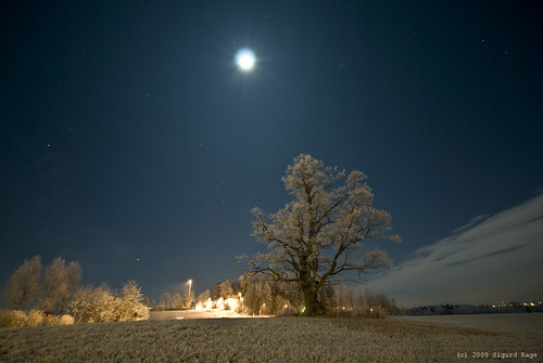 Full Moon over the Oak | by Sigurd R