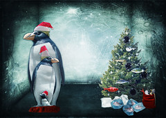 Family Penguin is waiting for Christmas...