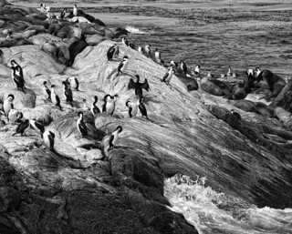 Penguins and Seals-Beagle Channel | by D'ArcyG