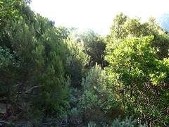 Remontée du chemin de Paliri :  le maquis sous Punta Russa