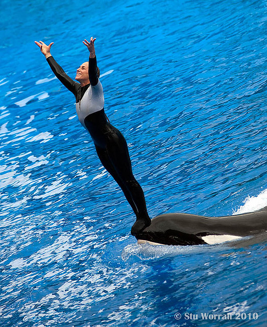 Seaworld Trainer - Dawn Brancheau   This is a picture I