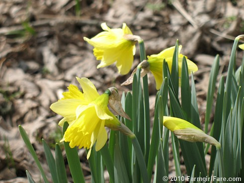 Spring Has Sprung 1 | by Farmgirl Susan