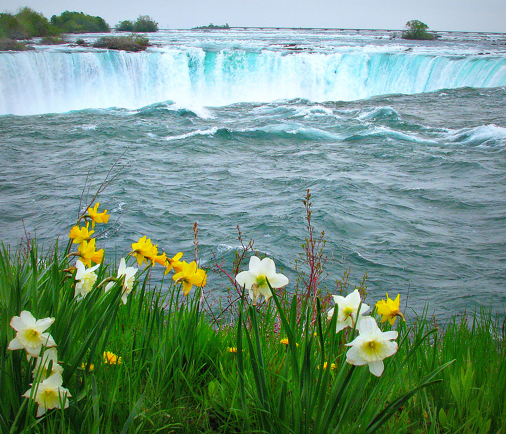Spring flowers at the falls canada colorado sands flickr spring flowers at the falls by colorado sands mightylinksfo