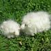Needle felted sheep waldorf inspired white 3