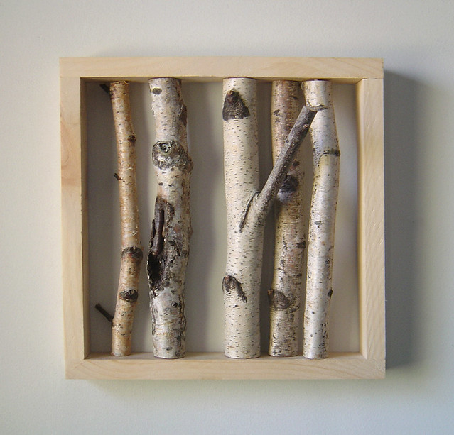 Organic Wall Art - white birch forest | This is one of my fa… | Flickr