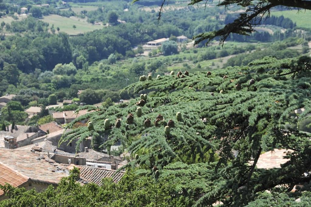 nice view evergreen trees - photo #3