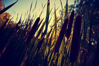 Cat Tails | by Garret Voight