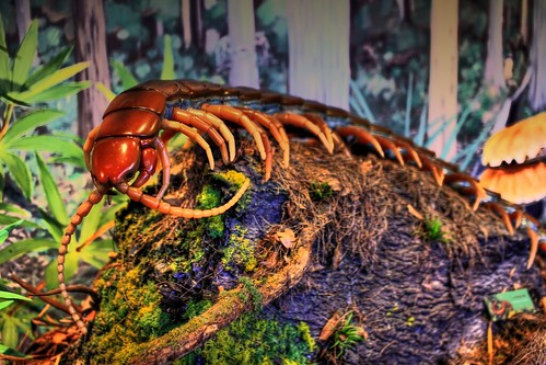 Giant prehistoric centipede