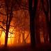 November Night Fog III