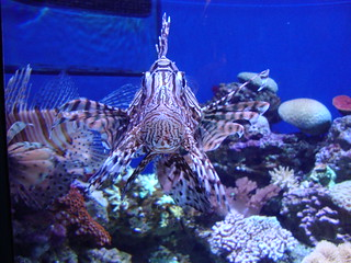 Lionfish | by RichCasillas SnapShots