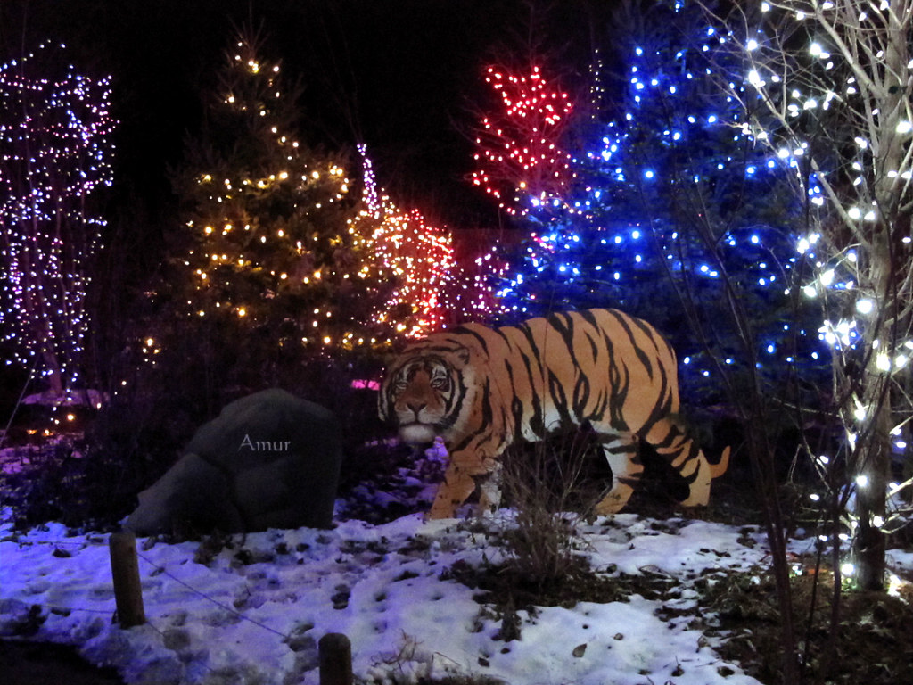 Christmas Lights At The Columbus Zoo In Ohio