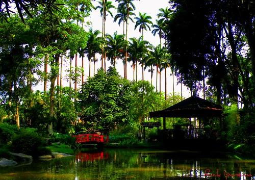 fotos jardim botanico do rio de janeiro:Jardim Botanico Rio De Janeiro