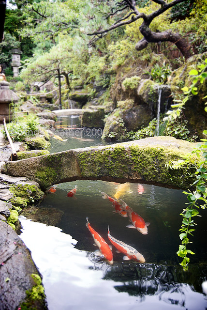 Moss covered stone bridge in japanese garden over koi carp for Japan koi fish pond