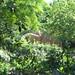 2008-06-22 - Ciutadella - 11
