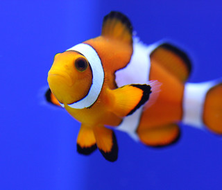 Nemo says hi! | by San Diego Shooter