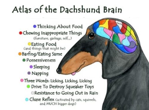 Dachshund Brain | By: Terry Pond | Omar & Marina | Flickr