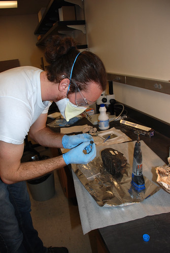 Examining mammoth tooth sample | by UCMP