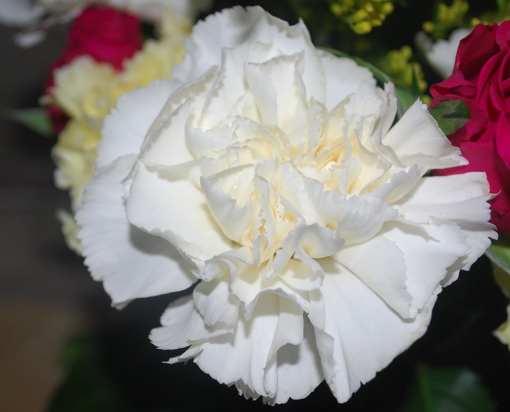 White Carnation Part Of A Bunch Of Flowers Pure White Angela