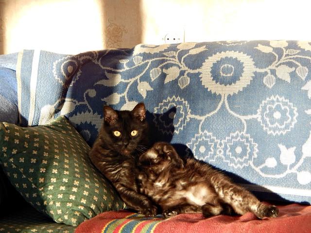 чёрный кот Муся на диване | HoroshoGromko.ru