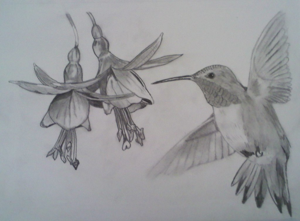 Pencil drawing of hummingbird by flyin j