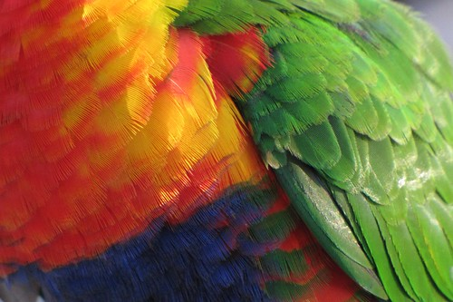 Colourful feathers | by zoom_eric