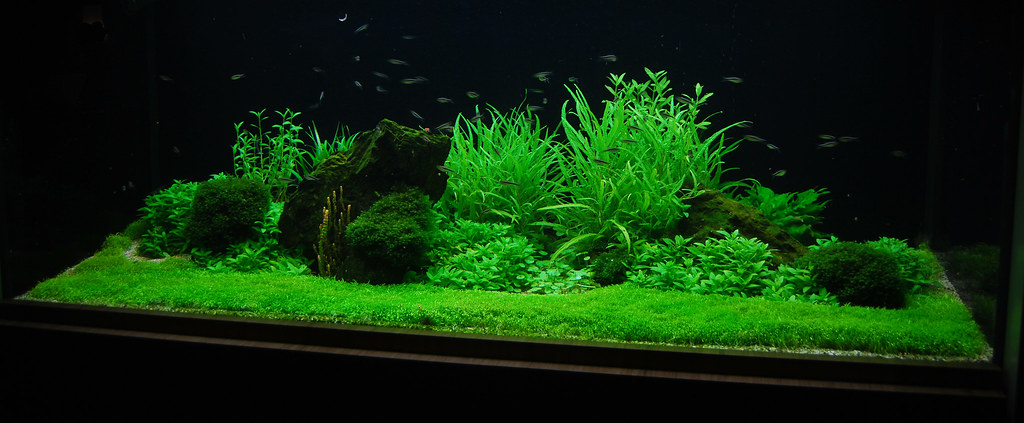 Aquascape With Utricularia Graminifolia This Is A Young Aq Flickr
