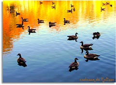 On golden autumn pond  #3 | by The Gifted Photographer
