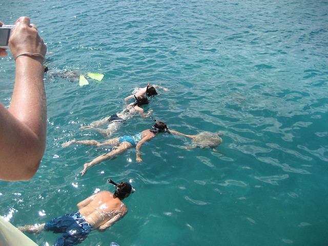Barbados Swimming With The Turtles And Harrison S Cave Tour