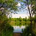 Bedfont Lakes