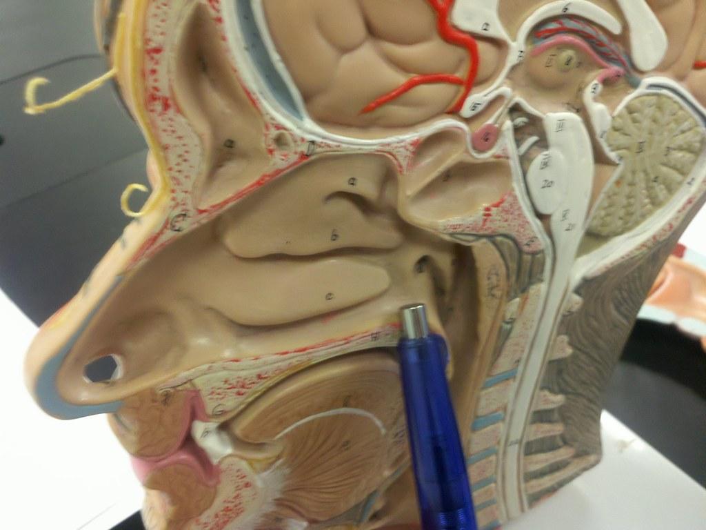 The world of internal medicine மகநல - 4 1