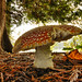 Mushroom Under Tree, Steilacoom City Park, Washington State
