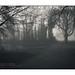 Fog Runner