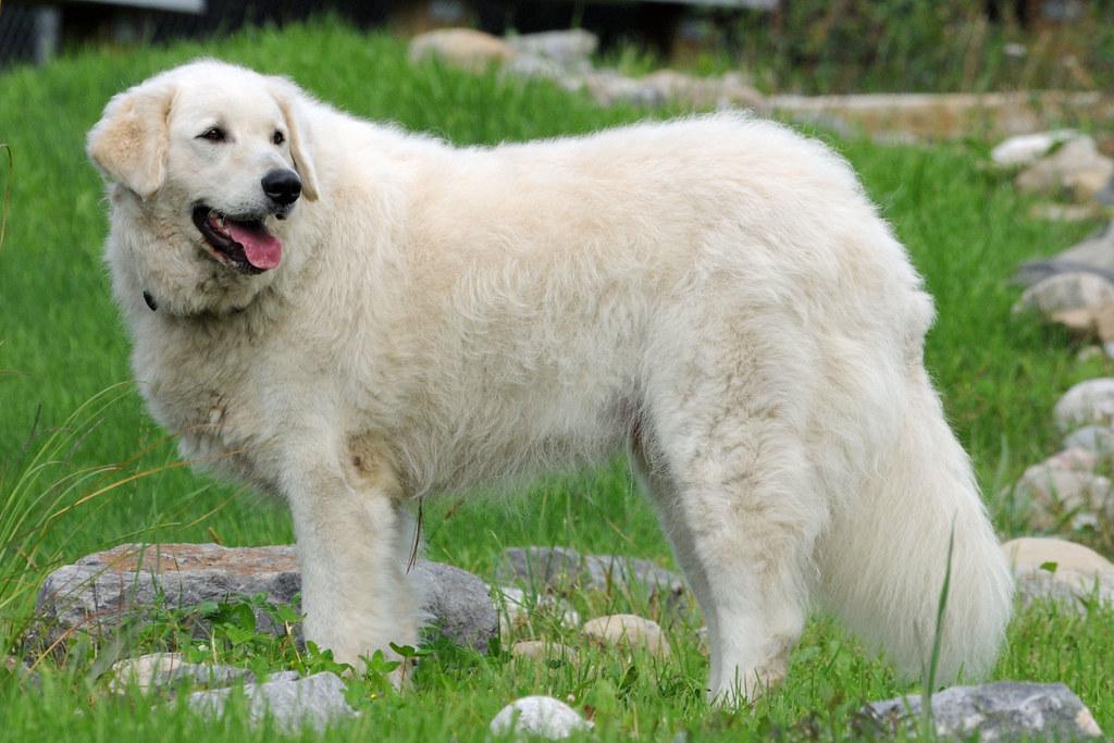 Adopt A Rescue Dog Albany Ny