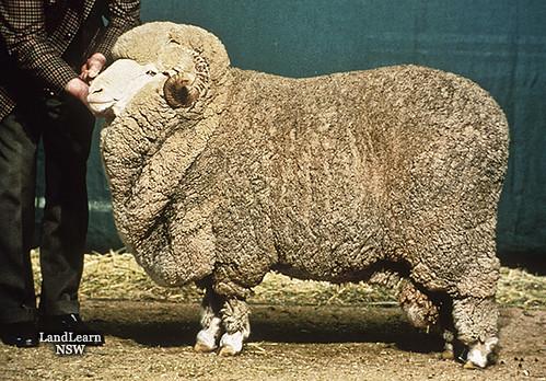 нужном сайте! самая вкусная порода овец валютном рынке
