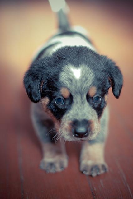 Aear Dog Rescue