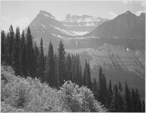 "Trees and bushes in foreground, mountains in background, ""In Glacier National Park,"" Montana. 