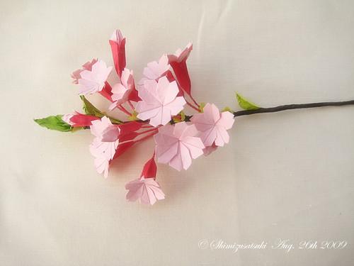クリスマス 折り紙 折り紙 桜 : flickr.com