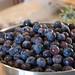 Blueberries are Photogenic