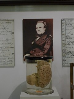 Babbage and His Brain | by joncallas