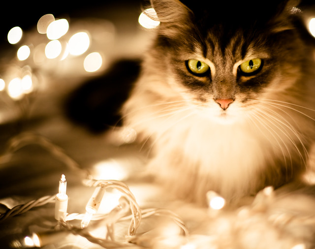 Festive Lights, Sayeth the Cat | 2009/12/12: Lots of lights … | Flickr