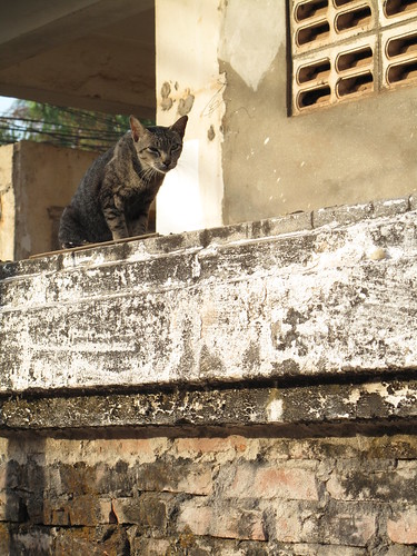 ... Cat - Vientiane, Laos | A stray cat stares us down fr… | Flickr
