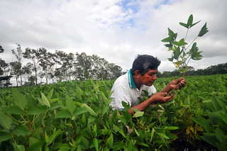 Bolivia_soybean | by CIAT International Center for Tropical Agriculture